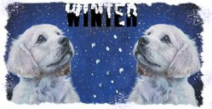 logo-winter-twin