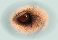 eye-logo-gr