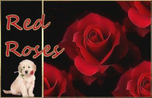 label-red-rose