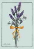 lavender-gr