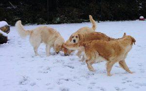 30-groep-sneeuw